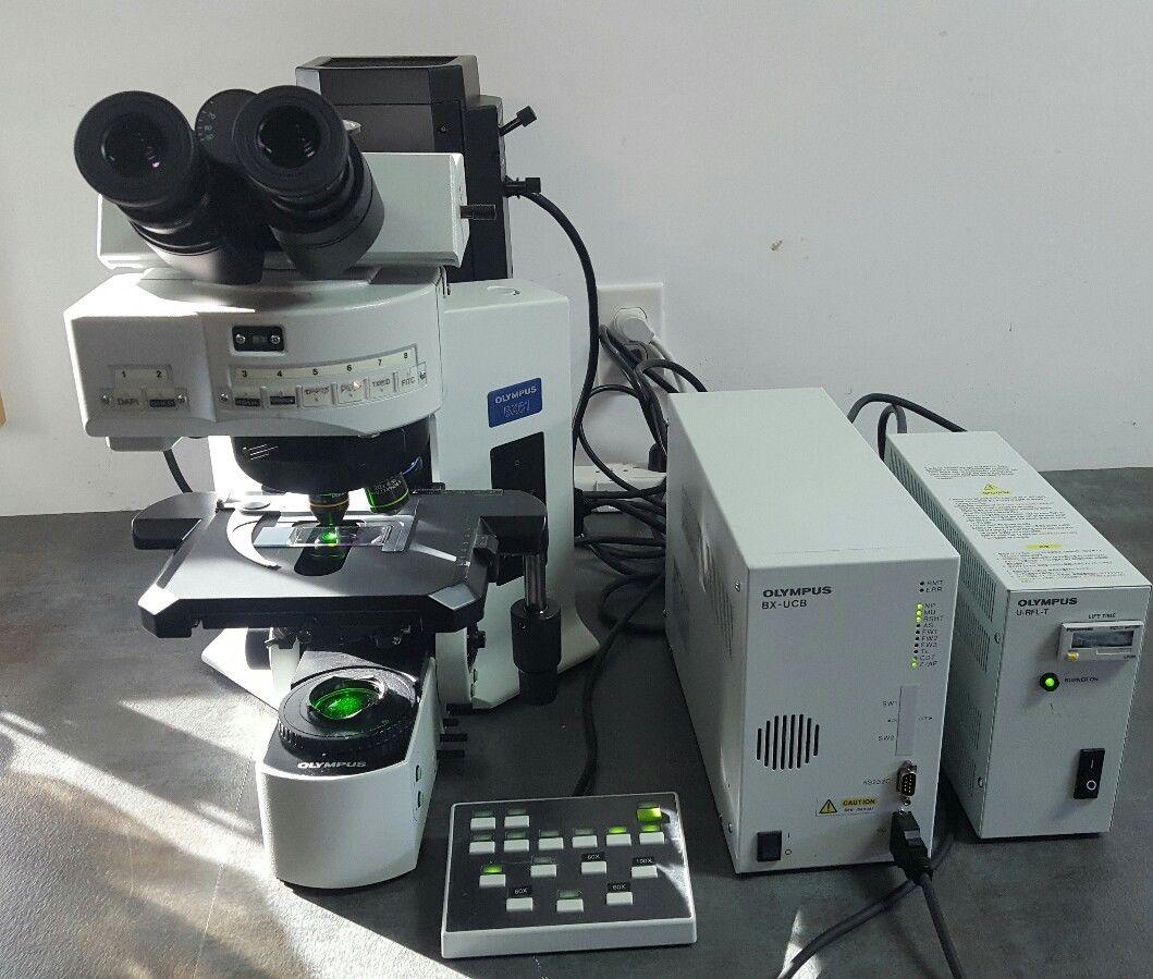 Olympus Microscope Bx61 Fish Fluorescence In Situ